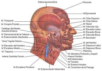 Los indicios y las causas de la enfermedad de la osteocondrosis